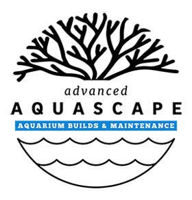 Advanced Aquascape